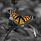 Butterfly  by Rob Hawkins
