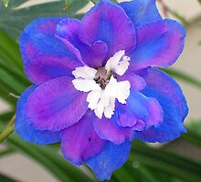 Single Delphinium by CynLynn