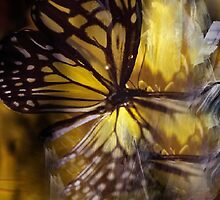 Magical Metamorphosis by Mystic Raven 9
