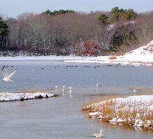 winter birds by Peter Cook