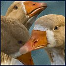 Every Which Way Geese by Trudy Wilkerson