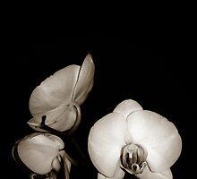Phalaenopsis Orchid by LOREDANA CRUPI