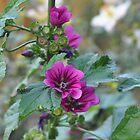 Purple Flower by Sarah McKoy