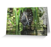 Limpkin on the hunt Greeting Card