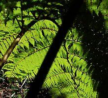 Green fern canopy by Stephen Denham