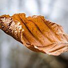Leaf by JEZ22