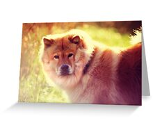 Do Not Disturb. Prince. Chow Chow Dog Greeting Card