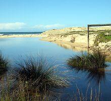 Redhead Beach: Wetlands by Cheryl Parkes