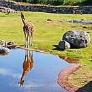giraff by Rudschinat