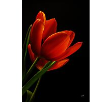 The Tulips * Wall Art Photographic Print