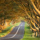 Beech Avenue by Andrew Doggett