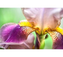 Bright Details. Macro Iris Series Photographic Print