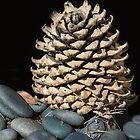 Lonely Pine Cone  by heatherfriedman