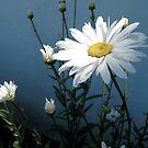 fleurs by Nicole M. Spaulding