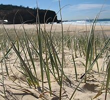 Beach Grass by Cheryl Parkes