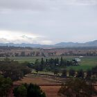 Hunter Valley by Cheryl Parkes