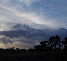 Heath Sun by Phototaffic