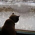 Matso & the Snow by tonymm6491