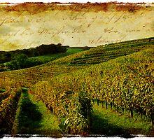 Forgotten Postcard - Monein, France by Alison Cornford-Matheson