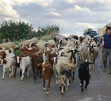 Goats by M G  Pettett
