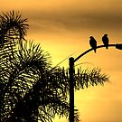Morning Light, A Bird's Delight by CarolM