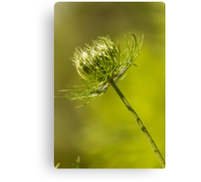 Weed Canvas Print