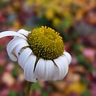 Wildflower hanging on into fall by Denise Goldberg