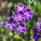 Pretty Purple by heyitsmefi