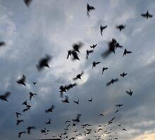 A flock of pigeons at sunrise by nurulazila