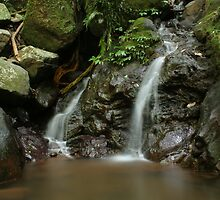 Waterfall - Dorrigo National Park by Peter South