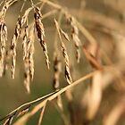 Grains 3 by Rebecca Leonard