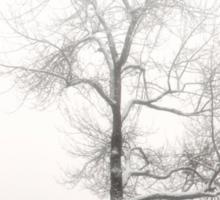winter tree Sticker