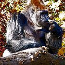 Silverback Art by IanPharesPhoto