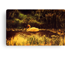 Swan at the Golden Lake  Canvas Print