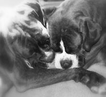 Close & Together  -Boxer Dogs Series- by Evita
