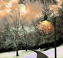 Wintery Walkway by digitalmidge