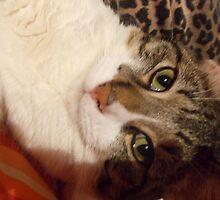 my cat by Jesika Jule