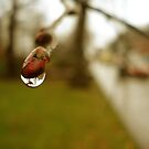 Catching Rain by Maureen Kay