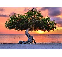Watapana Tree - Aruba Photographic Print