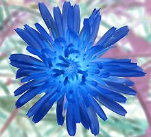 If Dandelions Bloomed in January by Mike Solomonson