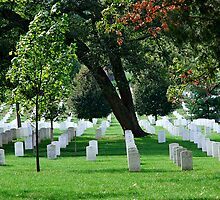 Arlington National Cemetery by Renee Hubbard Fine Art Photography