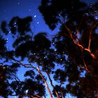 Star trails &amp; eucalypts by Duncan Waldron