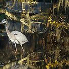 Great Blue Heron at Brookgreen by imagetj