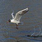 Hop, Skip & Fly by Robert Abraham
