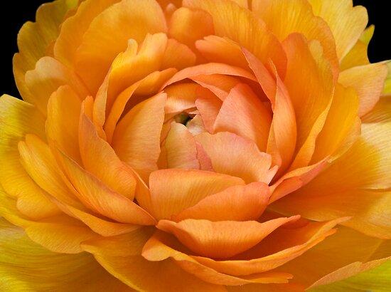 Orange by Krys Bailey