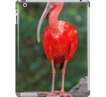 Bird, Iguazu, Brazil iPad Case/Skin