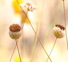 Spent my petals by David Rozario