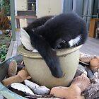 CAT NIP PLANT or CAT NAP by heavenscent