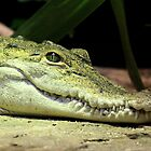 Never smile at the Crocodile by Selina Tour