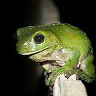Mr. Frog by heyitsmefi